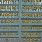 Rack of Butterfly Cocoons