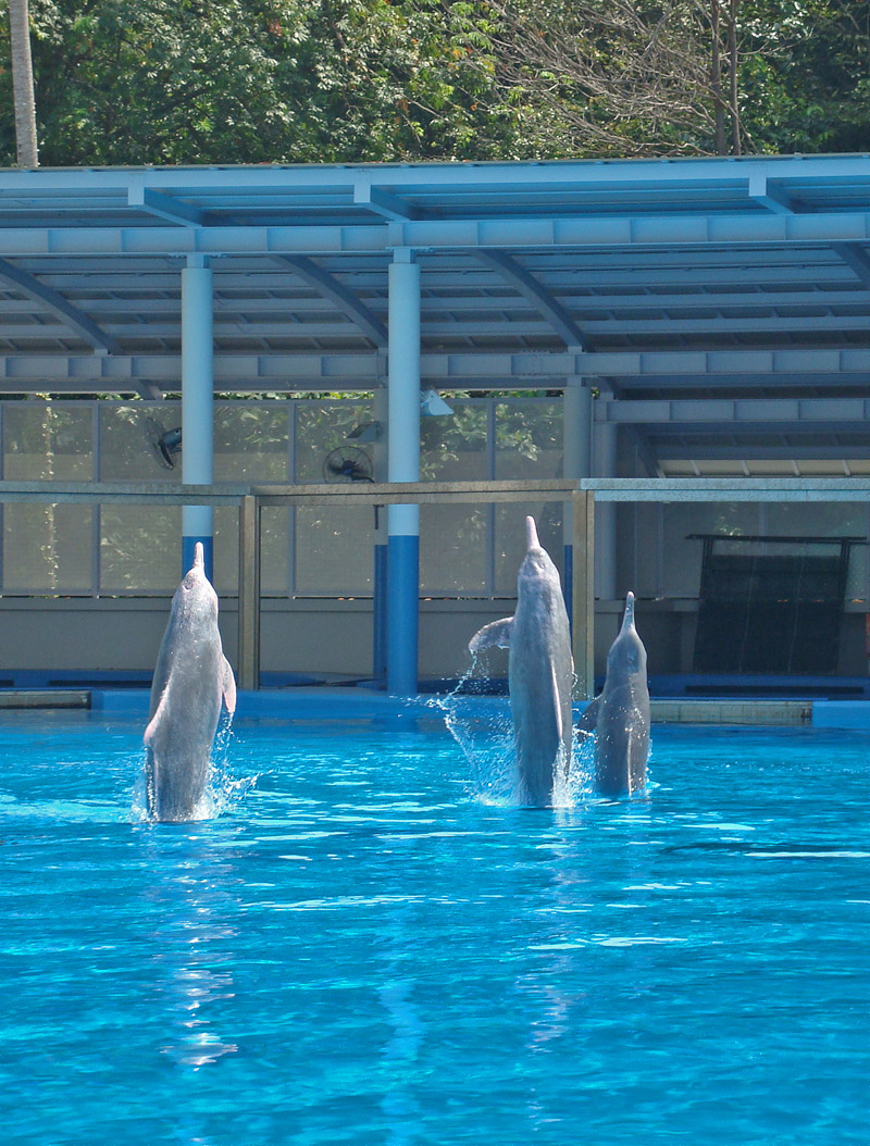 Pink Dolphins at Underwater World