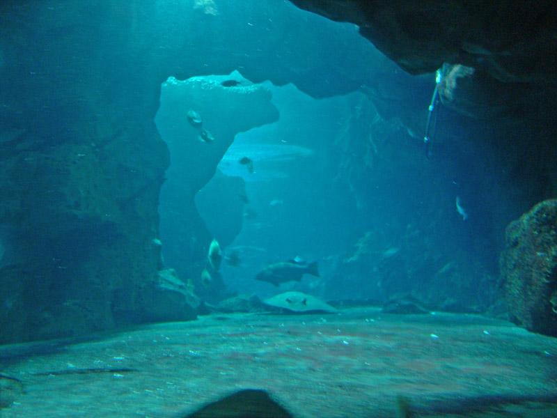 The Aquarium at Underwater World Singapore